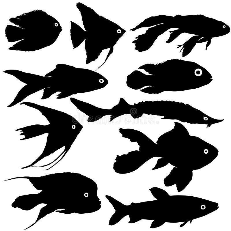 Silhouette réglée de noir des poissons d'aquarium sur le fond blanc illustration de vecteur