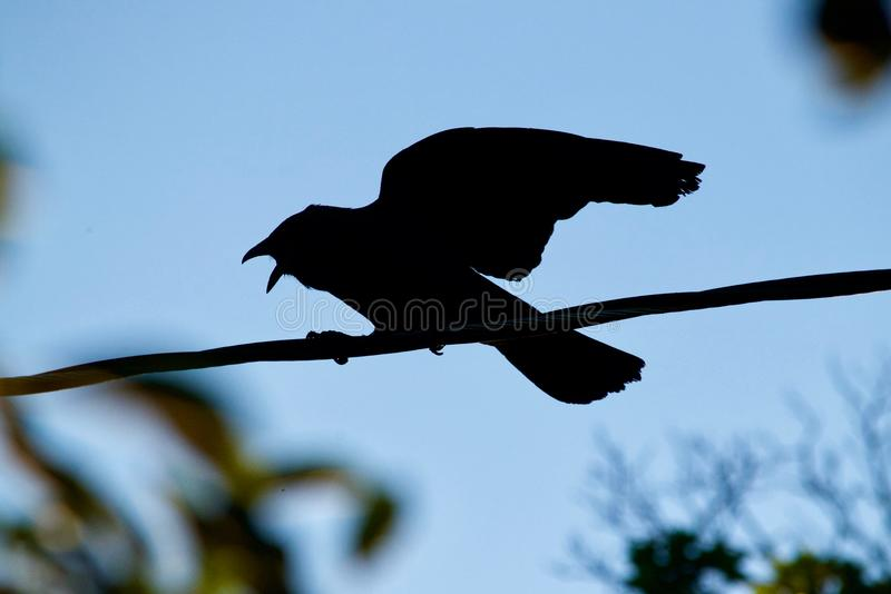 Angry raven silhouette stock photography