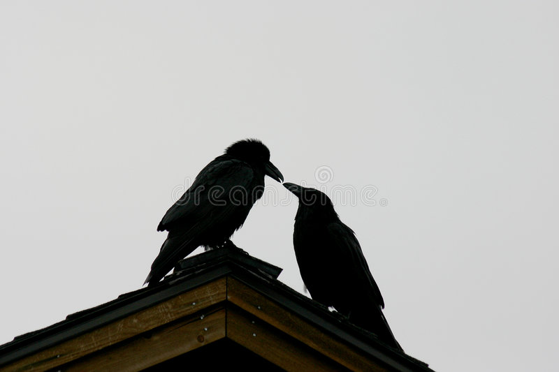 Download Silhouette Of Ravens Royalty Free Stock Photo - Image: 4885