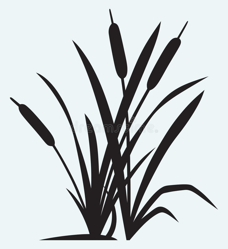 Silhouette reed vector illustration