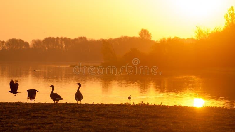 Silhouette renversante de lever de soleil images libres de droits