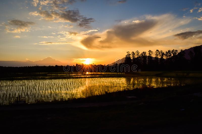 Silhouette Of Rice Fields Under Calm Sky During Golden Hour stock photos