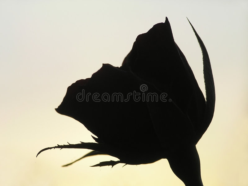 Silhouette Of Rose Stock Photo