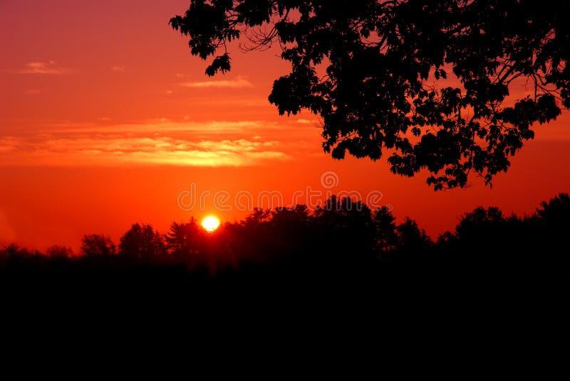 Silhouette rouge de coucher du soleil photos libres de droits