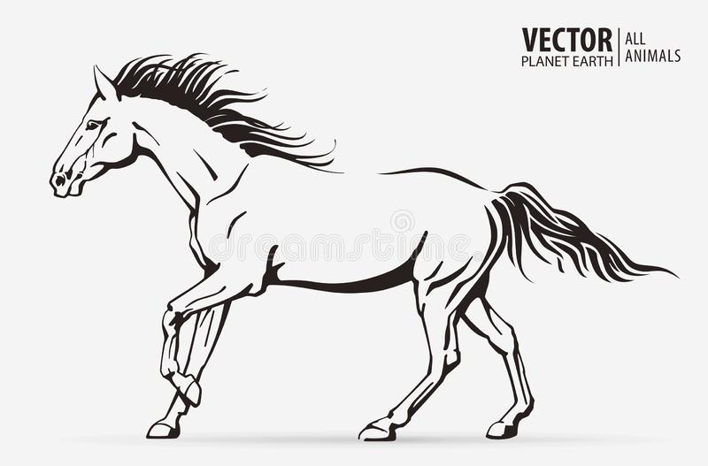 Silhouette of a running horse. Galloping animal. Logo. Champion. Sport. Isolated on a background. Vector illustration vector illustration