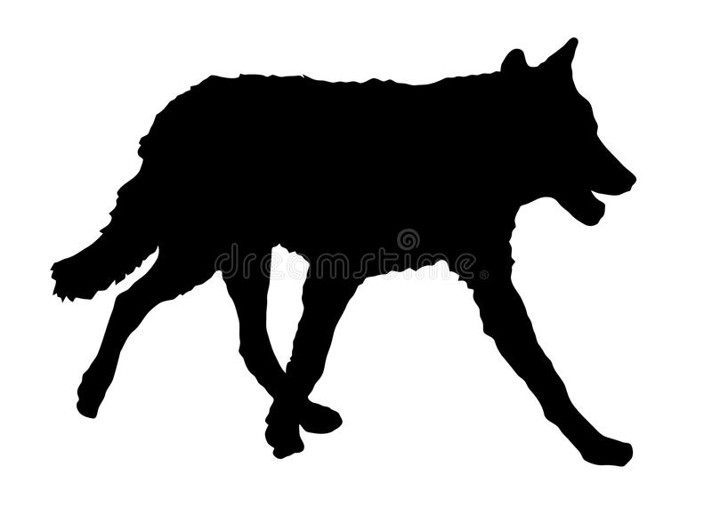 Silhouette of running wolf. Black and white silhouette of running wolf vector illustration