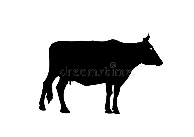 Silhouette of a rural cow isolated on white background. Side view. Vector illustration royalty free illustration
