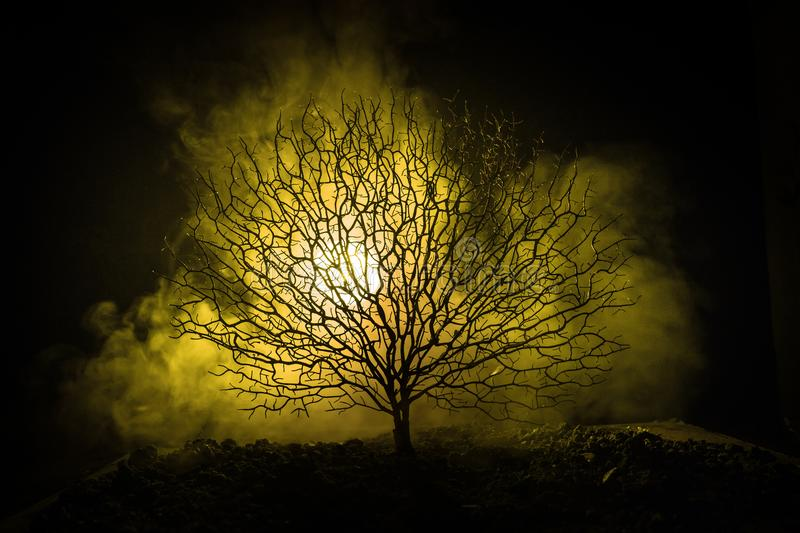 Silhouette of scary Halloween tree with horror face on dark foggy toned background with moon on back side. Scary horror tree with royalty free stock image