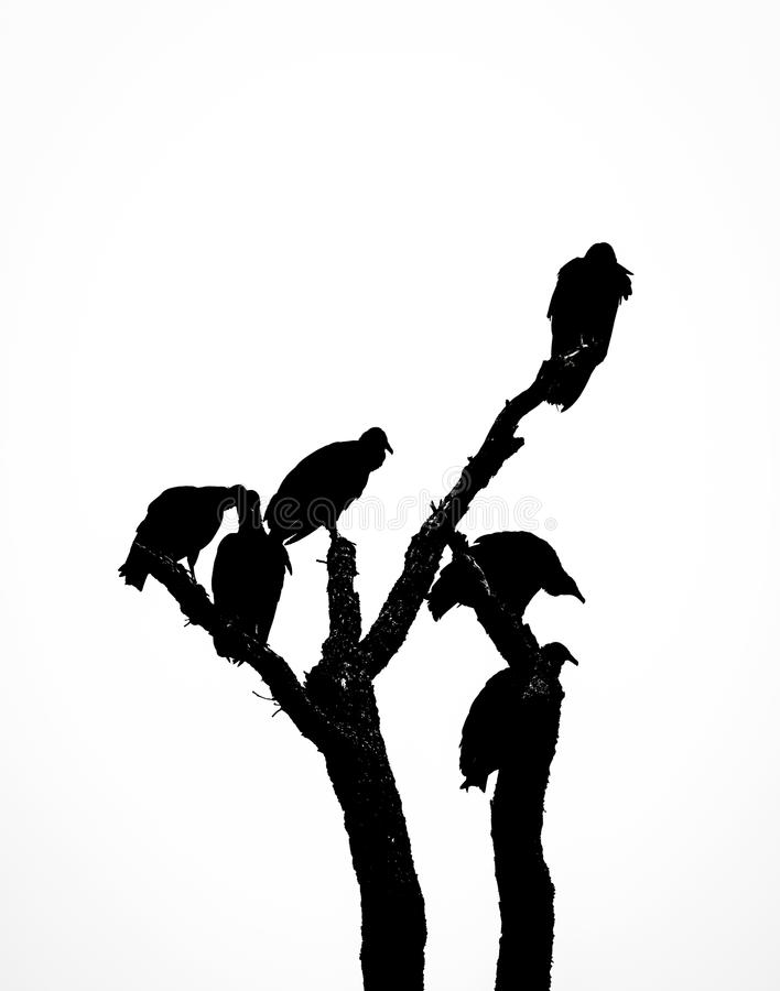 Silhouette of the Scavengers. Black and white shot of a group of vultures pereched on the top branches of a bare tree in silhouette against a clear sky royalty free stock images