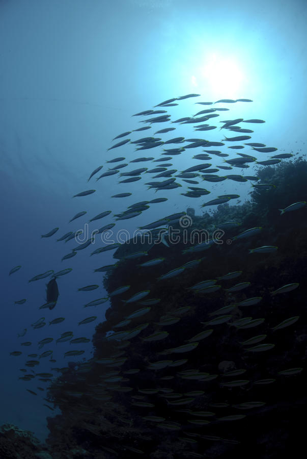 Silhouette of a school of fish