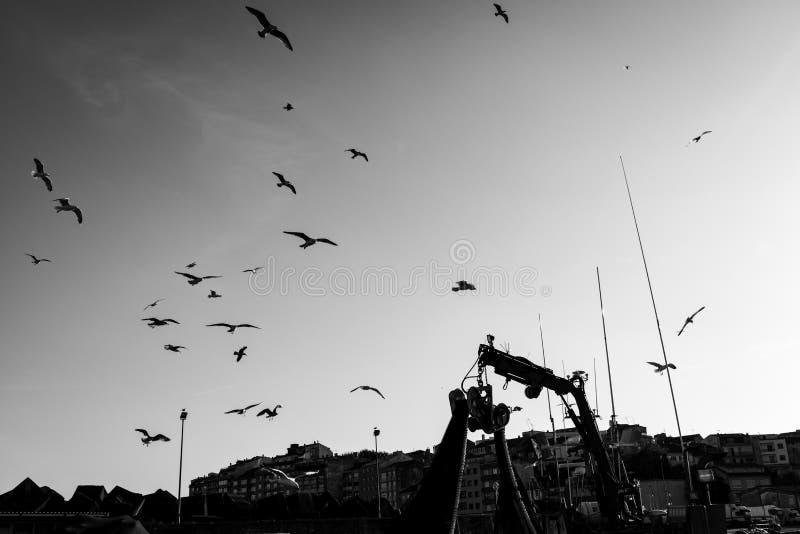 Silhouette of seagulls and cranes in Portonovo port stock image