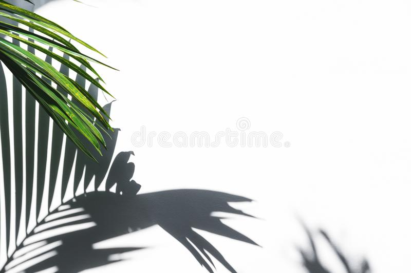 Silhouette shadow of palm leaves on white wall stock photo