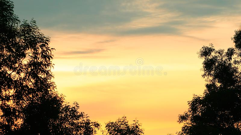Silhouette shadow tree on sunset sky feel like alone have copy space for put text stock images