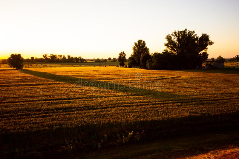 Silhouette of the shadows on wheats. royalty free stock photo