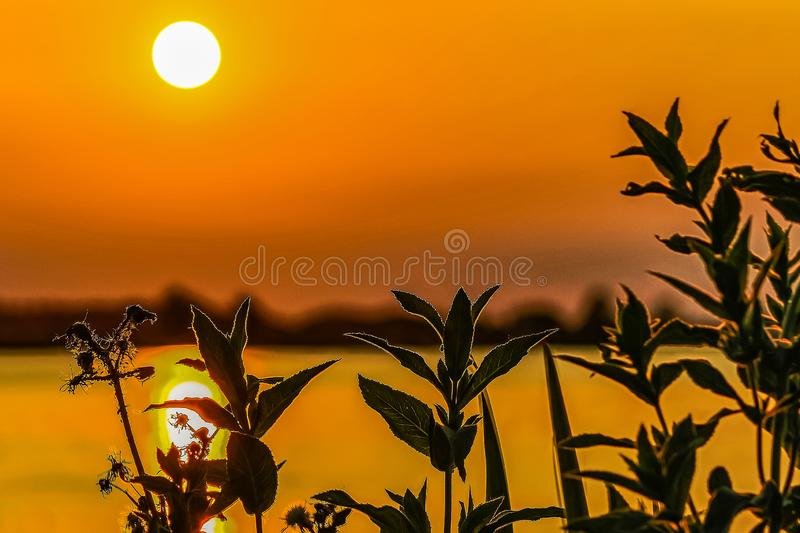 Silhouette of shore plants during sunset at lake Zoetermeerse plas in The Netherlands. Silhouette of shore plants during sunset at lake Zoetermeerse plas, The stock photo