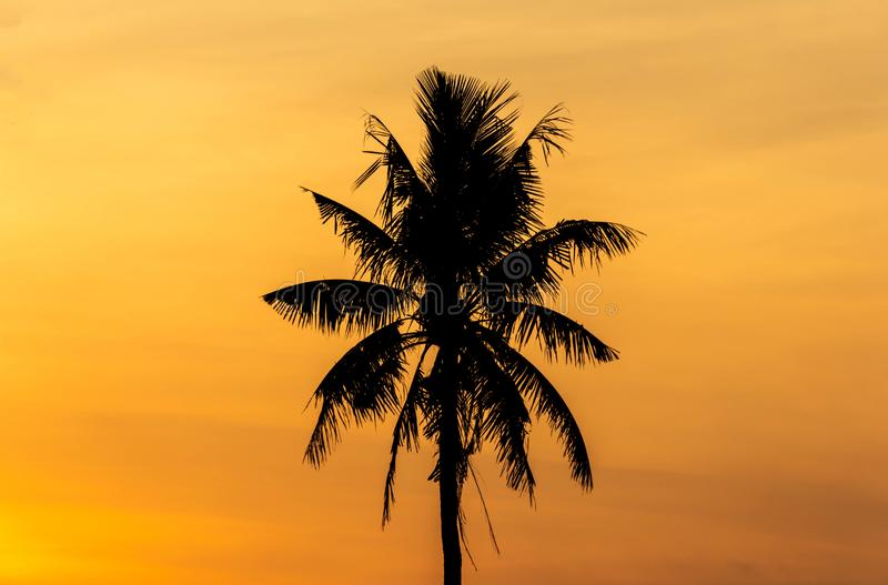 Silhouette palm tree with sunset background royalty free stock photography