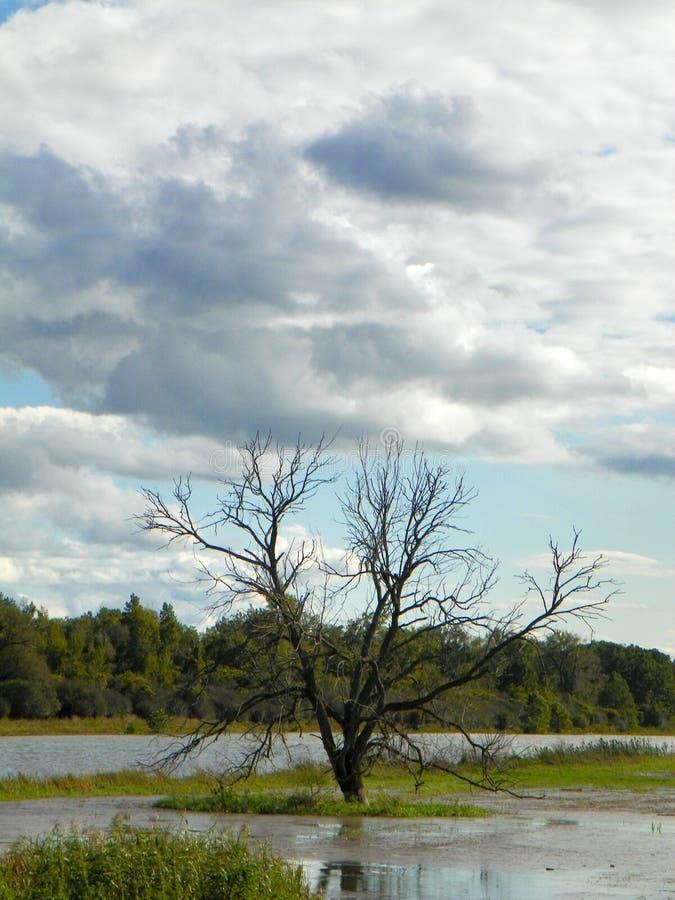 Silhouette solitaire d'arbre au centre du marais inondé image stock