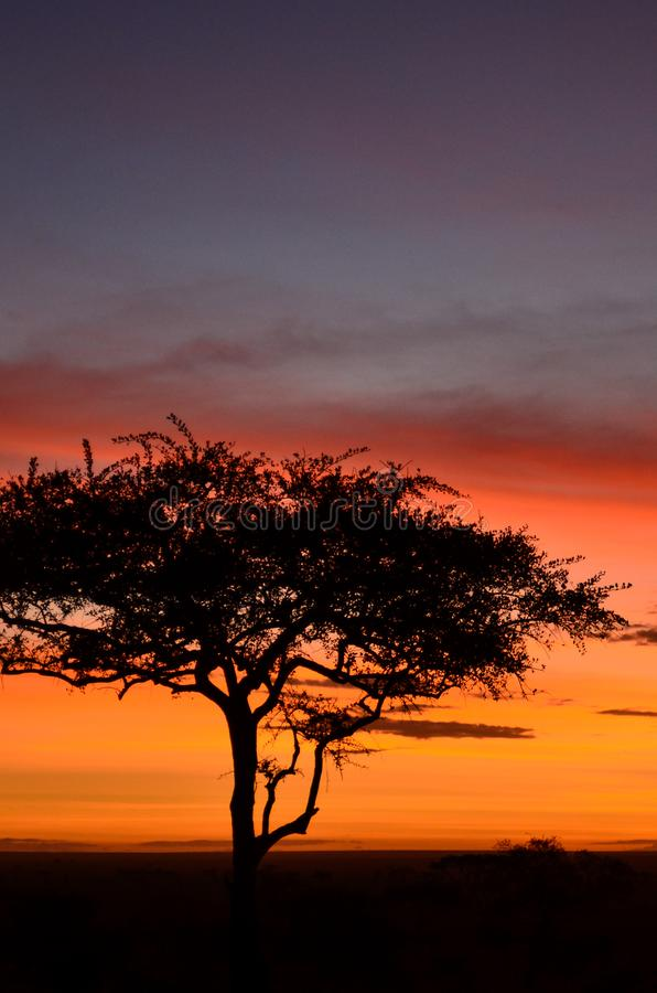 Silhouette of a solitary acacia tree against a bright orange sunrise in Serengeti National Park, Tanzania, Africa royalty free stock photos