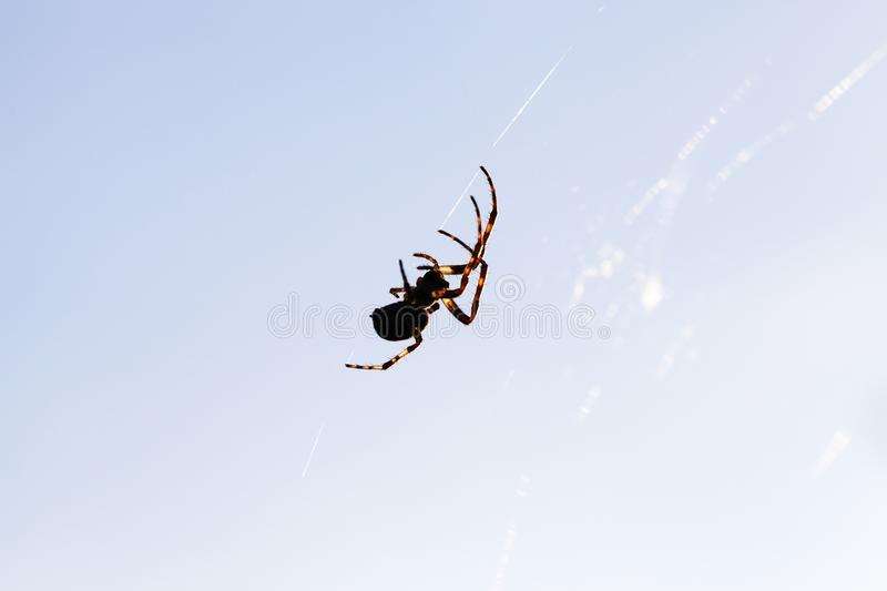 Silhouette of a spider stock photos