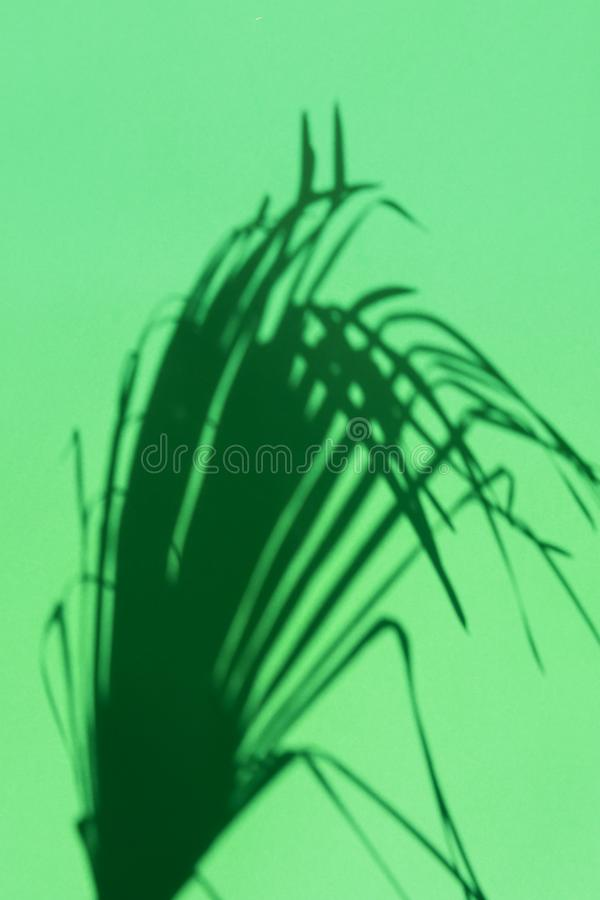 Silhouette of spiky feathery dangling palm leaf on green background. Hard light harsh shadows. Tropical vacation traveling royalty free stock image