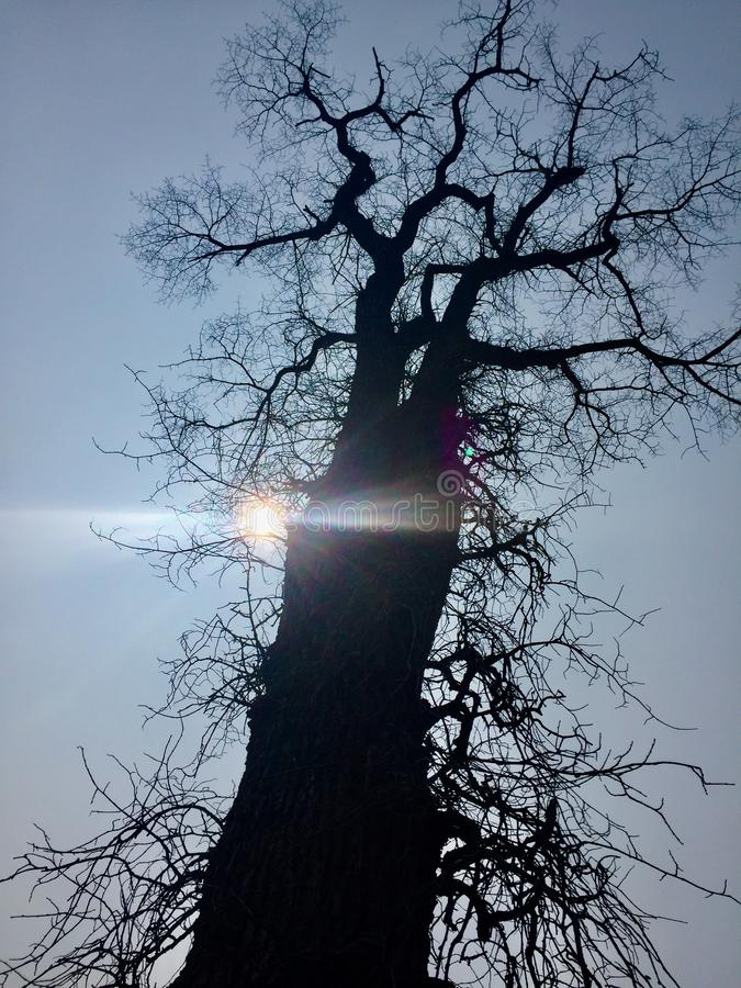 Silhouette of spooky tree stock image