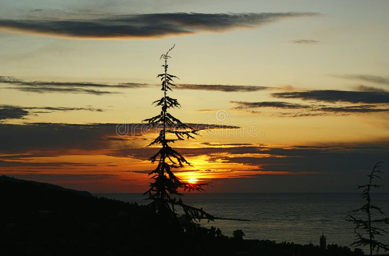 Tree against sky and seashore at sunrise royalty free stock images