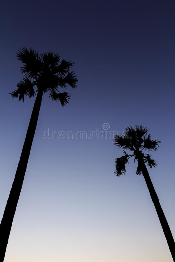 Download Silhouette Of Sugar Palm Tree On Sunset Sky Stock Photo - Image: 28897932