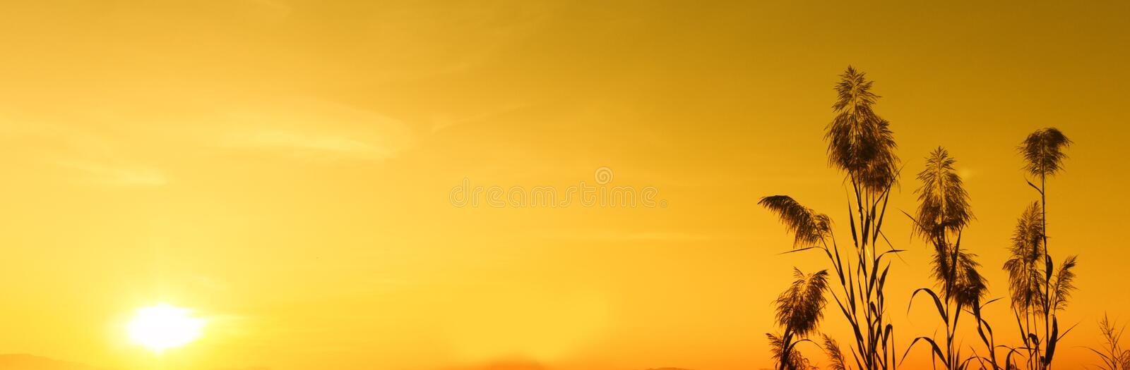 Silhouette sunset and yellow sky wallpaper ,background. Sunset silhouette . view silhouette yellow sky wallpaper and background stock photography