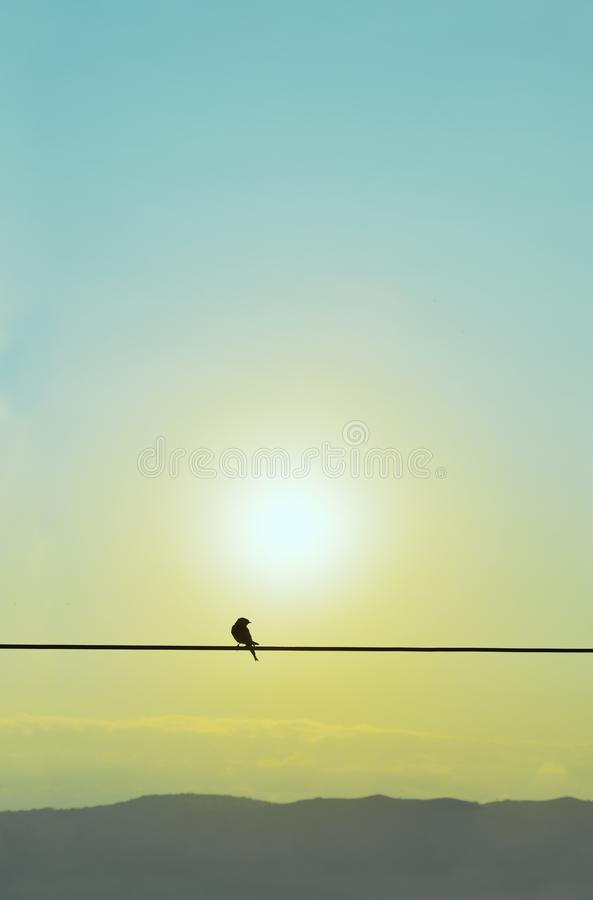Silhouette of swallow standing on a wire royalty free stock photo