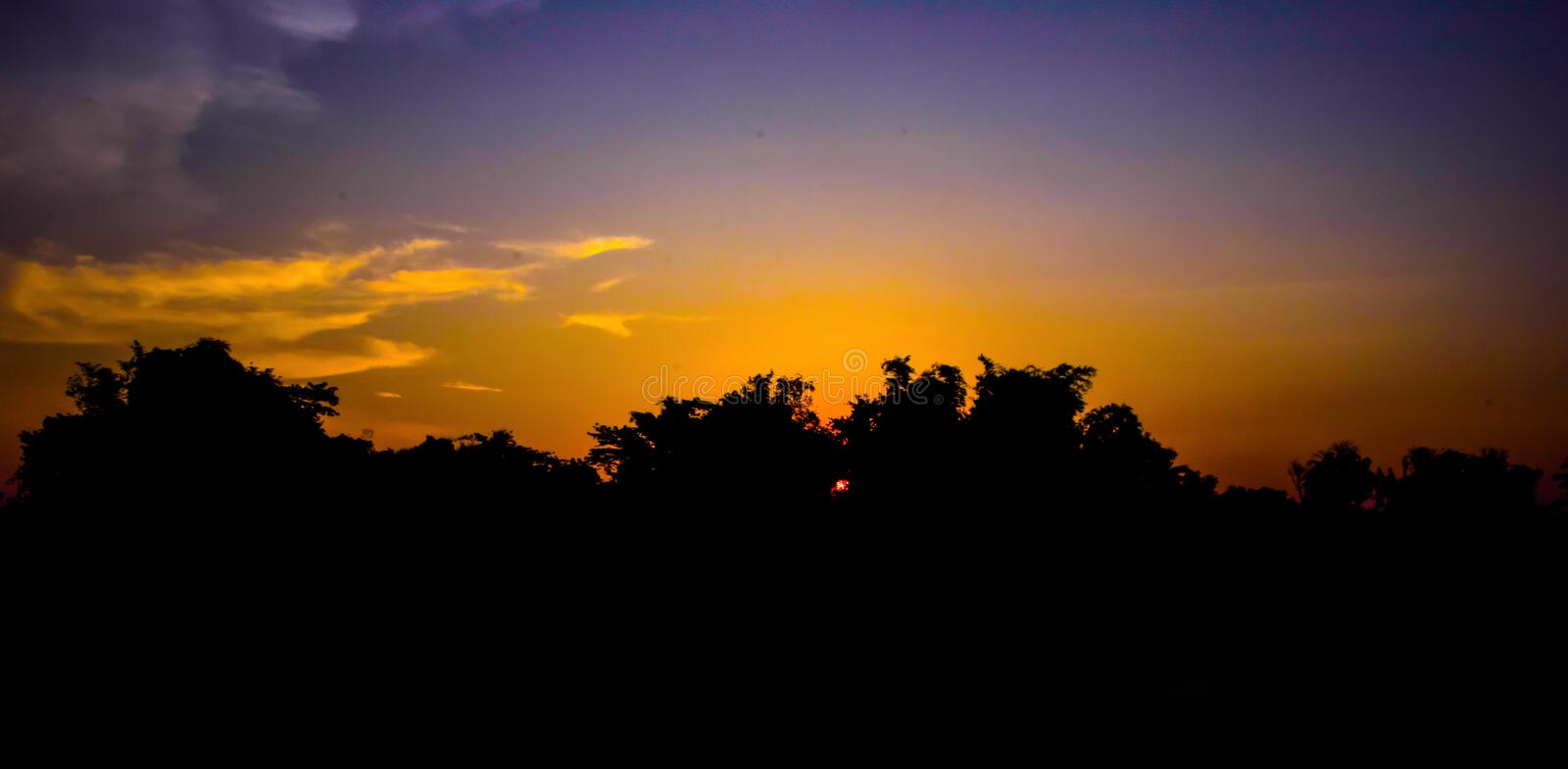 The silhouette of the top of the tree at sunset stock photography