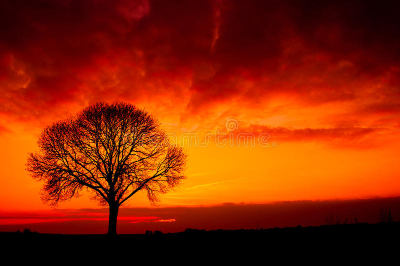 Download Silhouette from a tree stock image. Image of background - 24125161