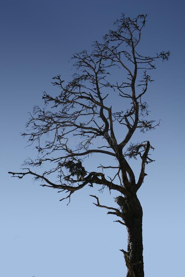 Silhouette Tree stock image
