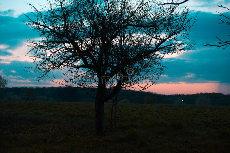 Silhouette of the tree against the background of the spring sky stock photo