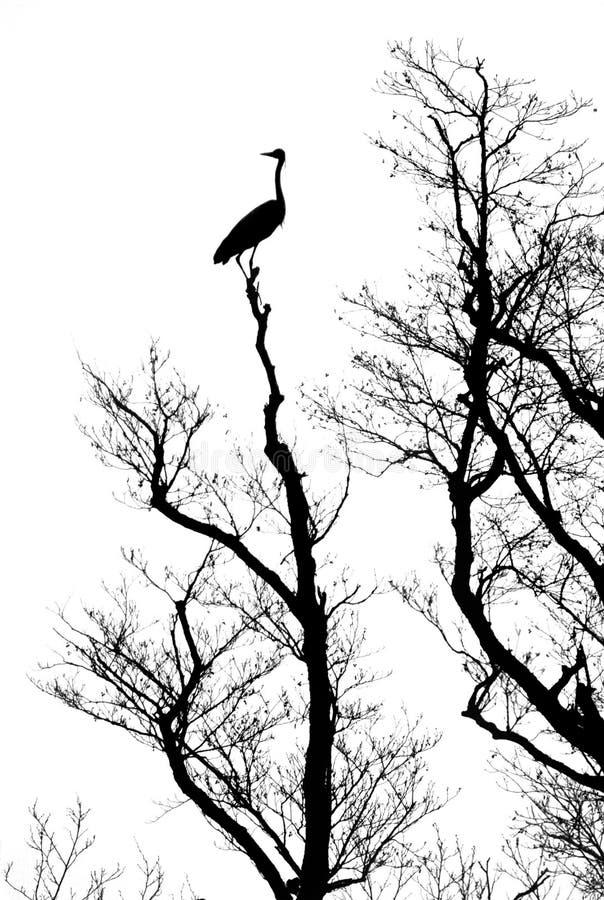Silhouette tree with bird stock photo