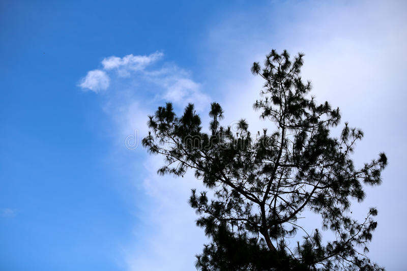 Silhouette tree with blue sky. royalty free stock images