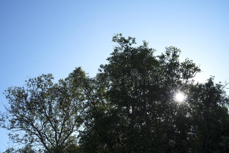 Silhouette tree and blue sky stock photography