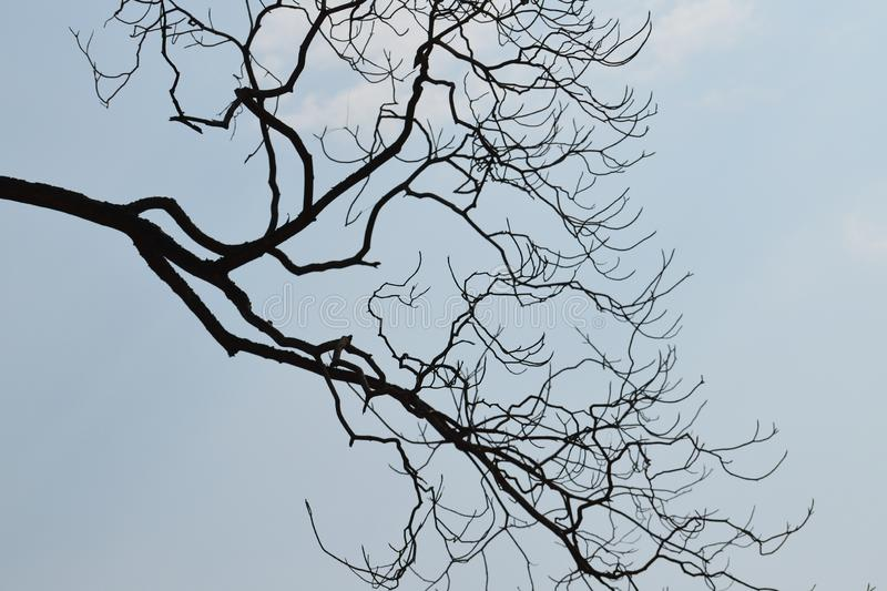 Silhouette of tree branch against blue sky royalty free stock photo
