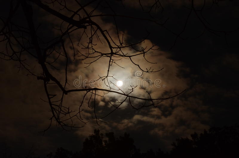 Silhouette of Tree Branch Under White Cloudy Skies during Nighttime royalty free stock images