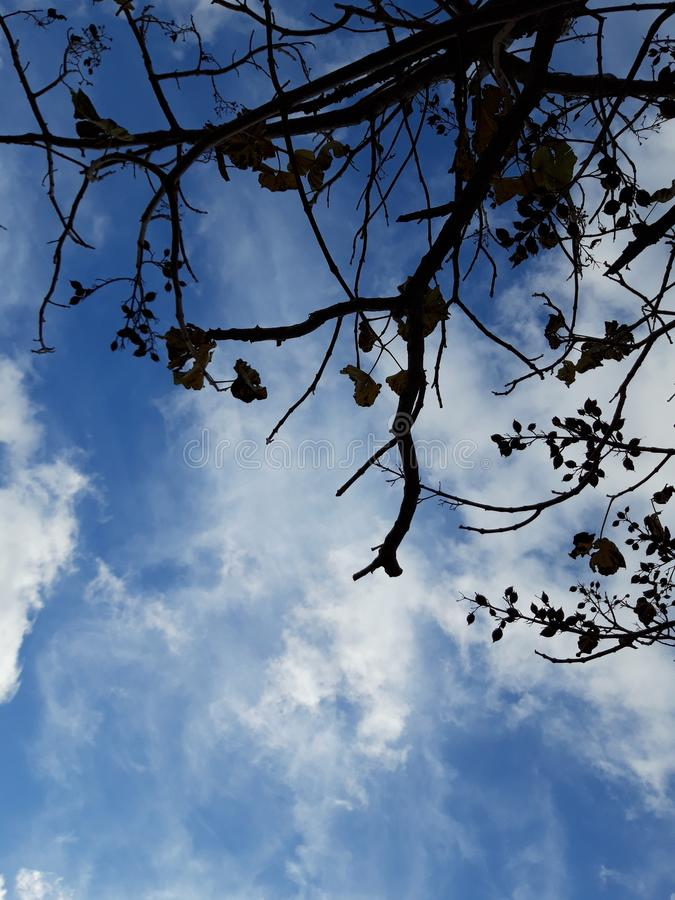 Silhouette of tree branches on the background of blue sky with clouds.  Perfect for backgrounds. stock photography