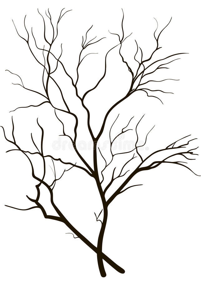 Silhouette of tree branches royalty free stock images