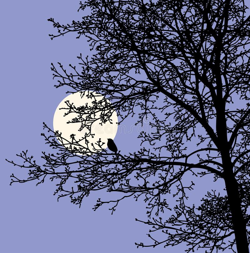Silhouette of tree branches in moonlit night. Vector image of silhouette of a tree in a night forest vector illustration