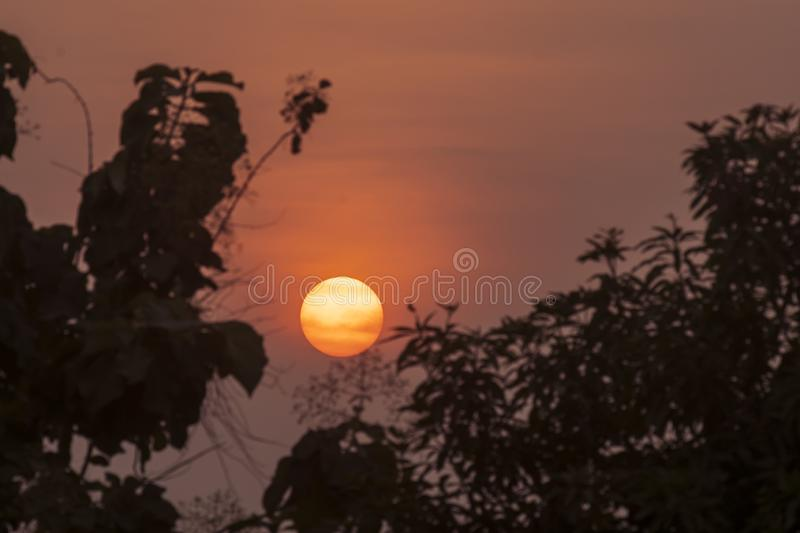 Silhouette of tree branches with sun at dusk time royalty free stock photography
