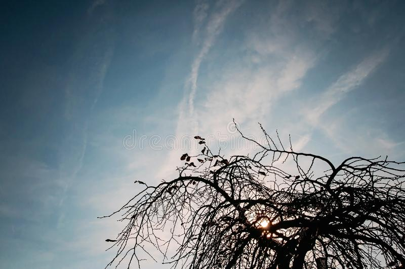 Silhouette Tree Branches Under Blue Sky stock images