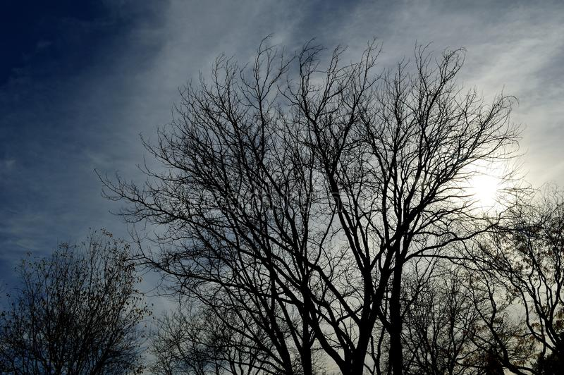 Download Silhouette Tree Cloudy Stormy Sky Stock Photo - Image of spring, silhouette: 104881850
