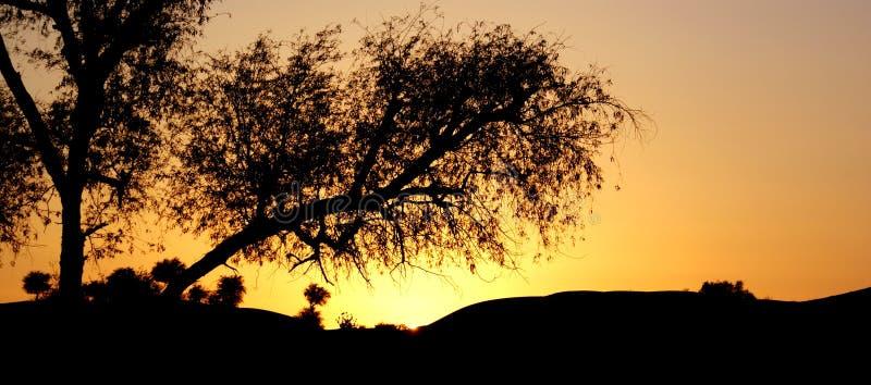 Silhouette tree in desert stock photography