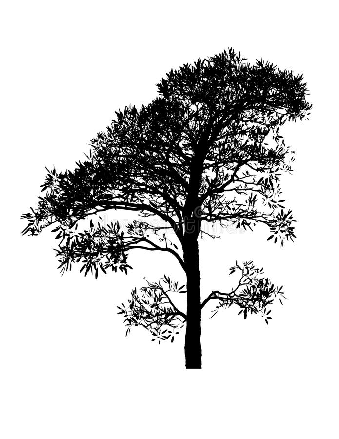 A silhouette tree is isolated on white stock image