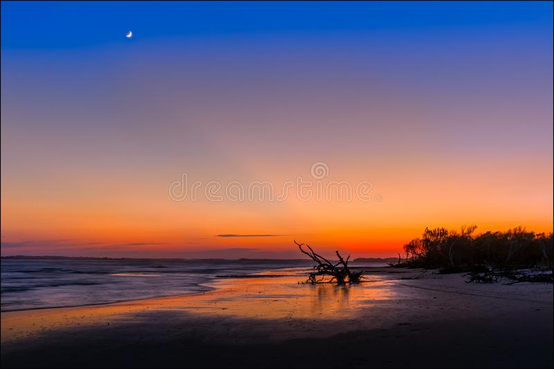 Silhouette of Tree Near Sea Shore during Sunset royalty free stock images