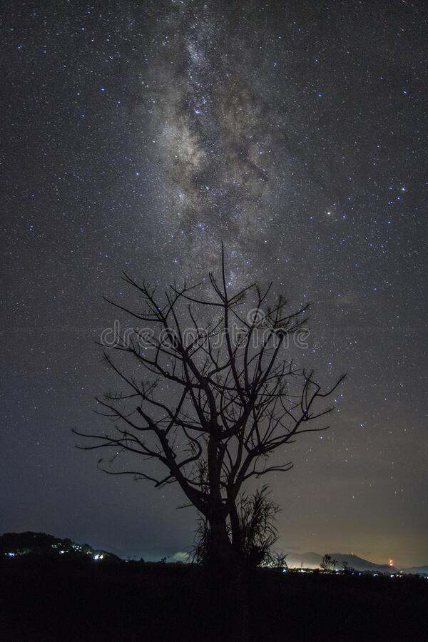Silhouette Of Tree At Night Free Public Domain Cc0 Image