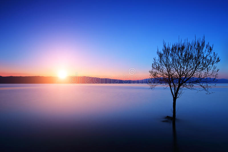 Silhouette of a tree in Ohrid lake, Macedonia at sunset. Silhouette of tree in Ohrid lake, Macedonia at sunset stock images
