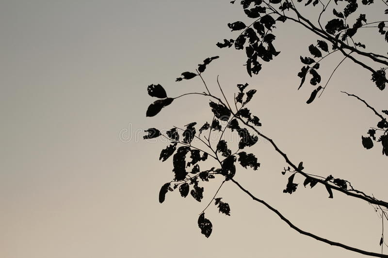 Silhouette of tree on sky background royalty free stock photos